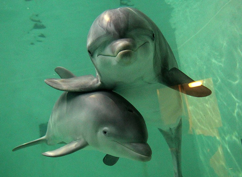 dolphins04